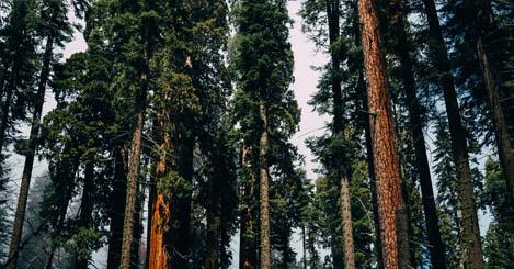 Orman İzinleri