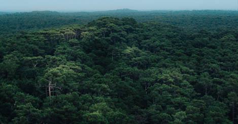 Forest Authorisation